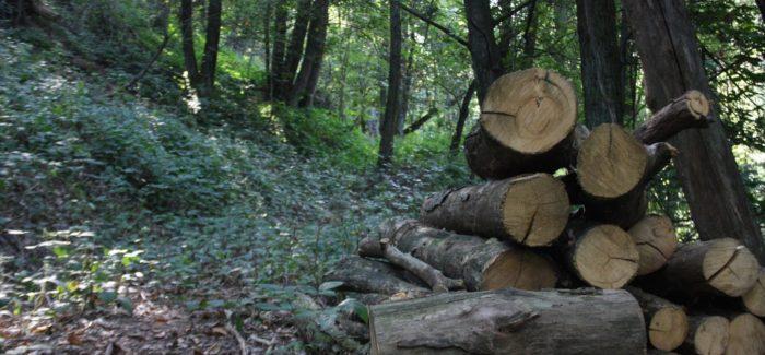 ATTENZIONE: Interventi di taglio del bosco in corso!